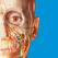 Atlas der menschlichen Anatomie Edition 2018 Icon