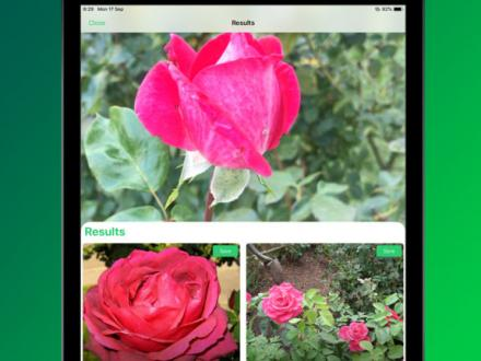 Screenshot von PlantSnap Plant Identification